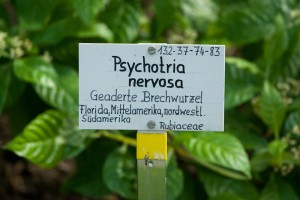 Botanisches-Museum-Berlin-Dahlem A berlin - Photo copyright Didier Laget