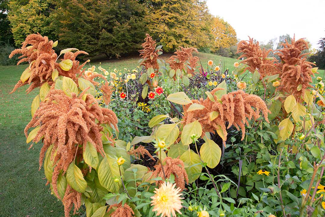 Fleurs dans Britzer Garten