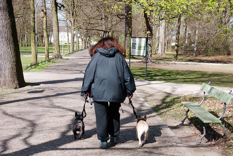 Une dame qui promenait deux bulls - Photo Didier Laget