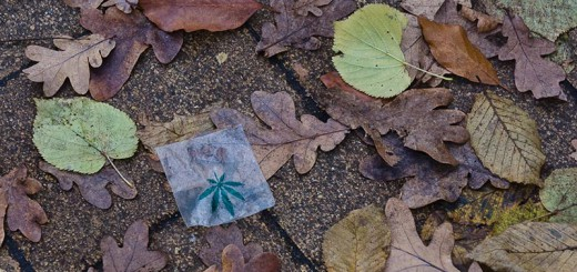 Feuilles A berlin - Photo copyright Didier Laget