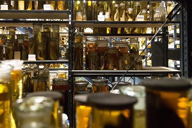 Naturkunde Museum Nass-Sammlungen  - Photo copyright Didier Laget