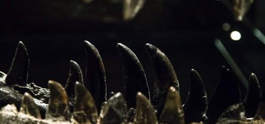 T-Rex au Naturkunde-museum - Photo Didier Laget
