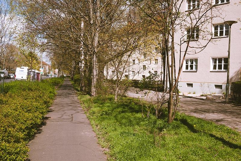 Piste cyclable grignotée par l'herbe et des buissons - Photo Didier Laget