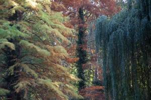 Tiergarten A berlin - Photo copyright Didier Laget