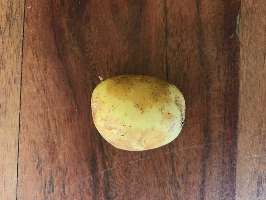 Une pomme de terre de Samsø