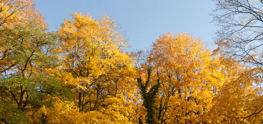automne-a-Kreuzberg A berlin - Photo copyright Didier Laget