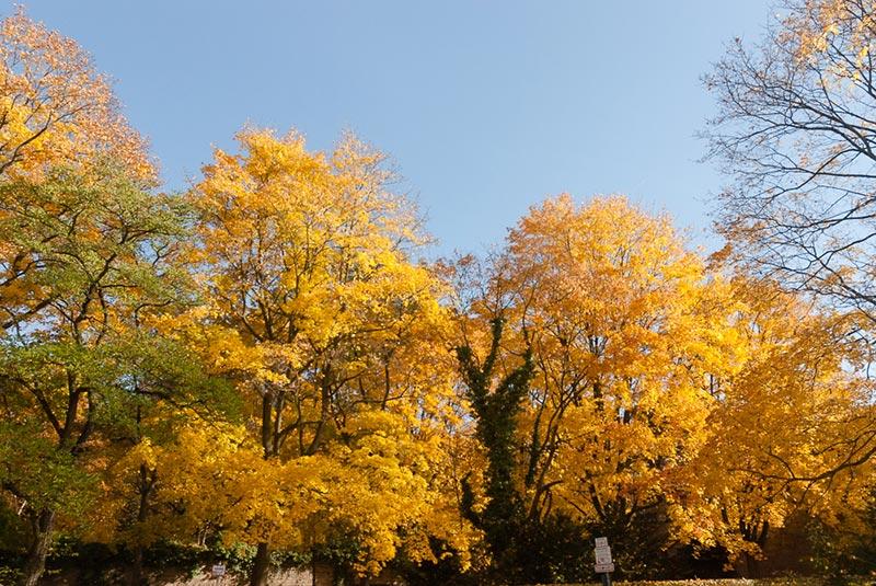 automne-a-Kreuzberg A berlin - Photo copyright Didier Laget