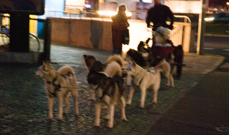 chiens-de-traineaux A berlin - Photo copyright Didier Laget
