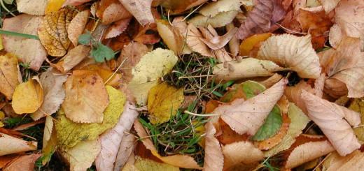 feuilles-mortes- A berlin - Photo copyright Didier Laget