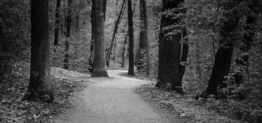 foret A berlin - Photo copyright Didier Laget