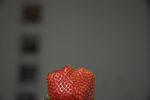 fraise A berlin - Photo copyright Didier Laget