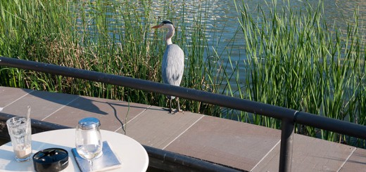 heron-dans-kreuzberg A berlin - Photo copyright Didier Laget