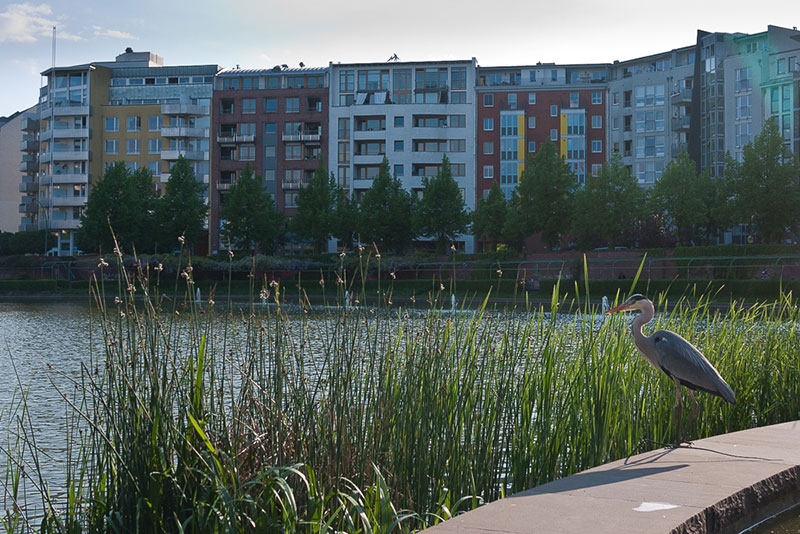heron-dans-kreuzberg A berlin - Photo copyright Didier Laget