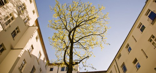 hinterhof-arbres- A berlin - Photo copyright Didier Laget