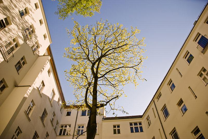 hinterhof-arbres- A berlin - Photo copyright Didier Laget