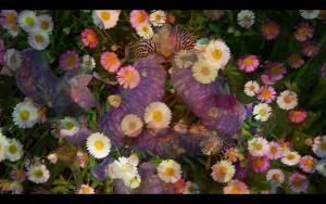 esteban - une vidéo par Didier Laget