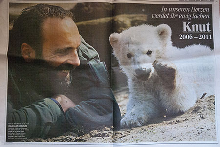 knut-mort A berlin - Photo copyright Didier Laget