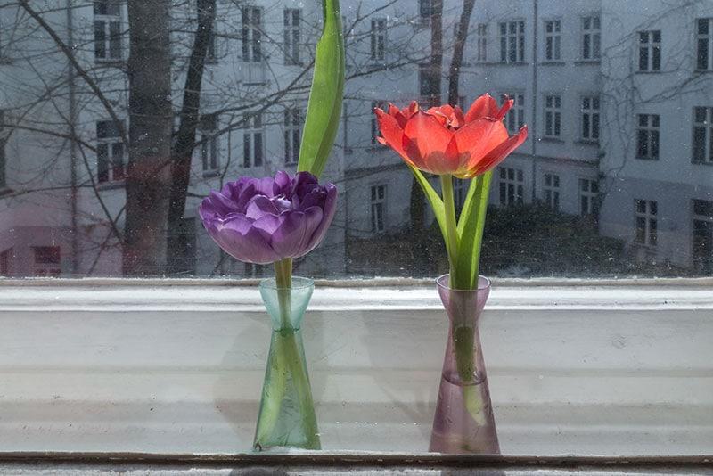 Comment conserver des fleurs, à Berlin, longtemps et gratuitement - Photo Didier Laget