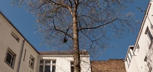 printemps-A berlin - Photo copyright Didier Laget
