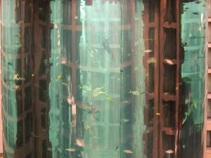 radisson-aquarium-A berlin - Photo copyright Didier Laget