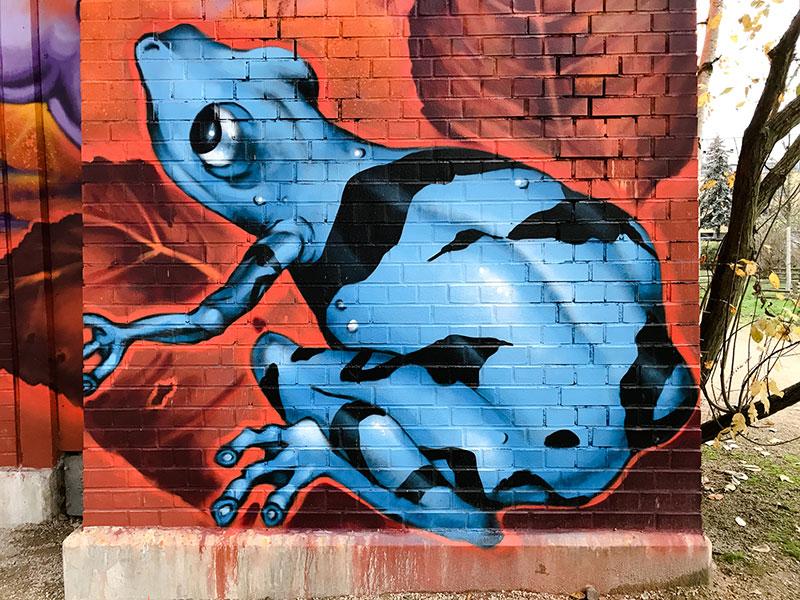 rainette  graffiti - Photo Didier Laget