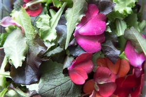 salade-de-fleurs A berlin - Photo copyright Didier Laget