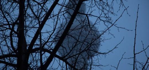 La Fernsehturm de janvier