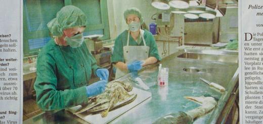 vogelgrippe-DSCN7563