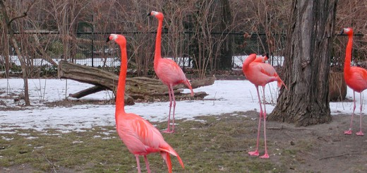zoo-berlin-A berlin - Photo copyright Didier Laget